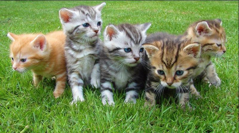 Agendamento para castração de gatos, no Rio de Janeiro