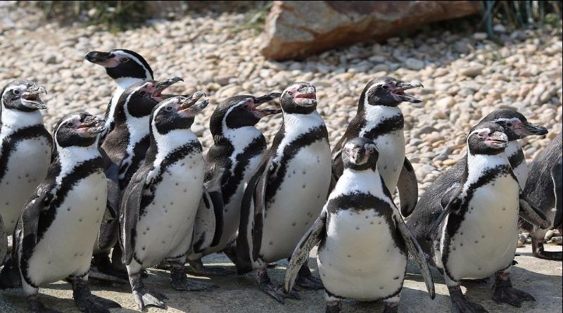 Desastre matou 40 mil pinguins na Antártida