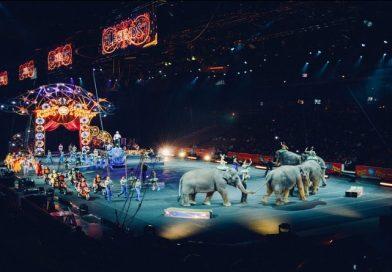 Em 2018, Irlanda proibirá o uso de animais selvagens em circos