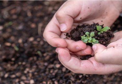 Guardiões de sementes resistem ao monopólio das multinacionais