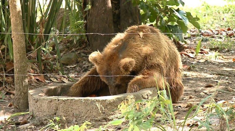 'Ursa mais triste do mundo' chega a santuário