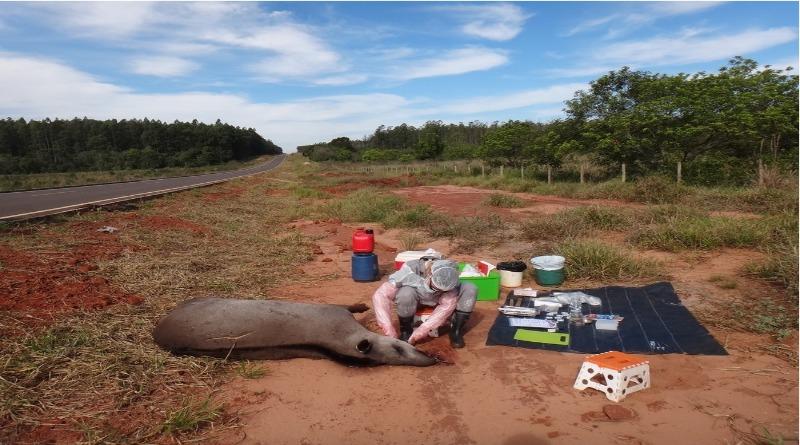Agrotóxicos proibidos no Brasil contaminam antas e alertam para perigo