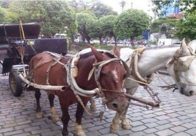 Fim da tração animal nas charretes em Petrópolis, segundo votação