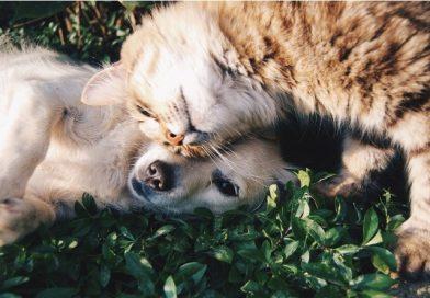 Horário de verão pode causar alterações em animais de estimação