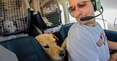 Homem salva cães e gatos da eutanásia